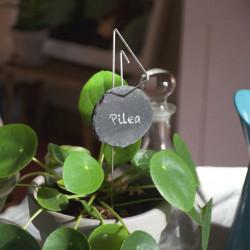Porte-étiquette Pablo avec étiquette ardoise ronde sur pilea