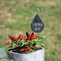 Porte-étiquette Juan avec étiquette ardoise goutte sur piment Samba red