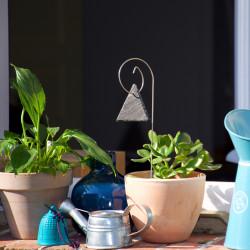 Porte-étiquette Gustav avec étiquette ardoise triangle sur plante d'intérieur