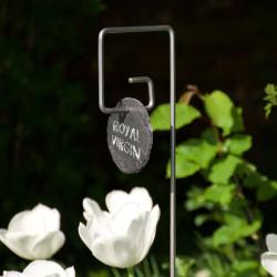 Tuteur métallique de jardin PIET fer 6 avec étiquette ardoise ronde sur tulipes Royal Virgin