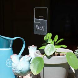 Porte-étiquette Piet avec étiquette ardoise carrée sur Pilea