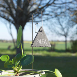 Porte-étiquette Piet avec étiquette ardoise triangle sur plante verte