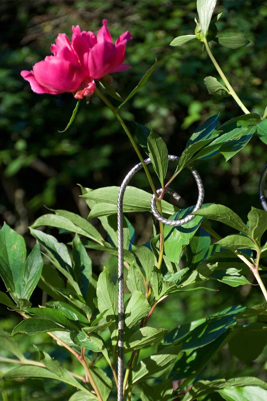 Tuteurs métalliques de jardin - fer cannelé Ø 6mm sur pivoine - Le jardin de Léon
